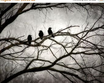 ON SALE Crow Print, Surreal, Moonight and Crows, Black Crow Print, 3 Crows, Mysterious Crow Print, Moonlit Tree, Flock of Crows