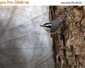 ON SALE Nuthatch, Red Breasted Nuthatch, Photography Print, Bird Home Decor Art Print, Modern Rustic Nature Print, Bird Lover Art, Bird Deco