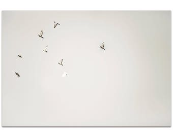 Minimalist Wall Art 'The Journey' by Meirav Levy - Wildlife Decor Contemporary Birds Artwork on Metal or Plexiglass