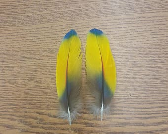 """Matched Pair Macaw 4 1/2"""" Wing Covert Feathers SB12"""