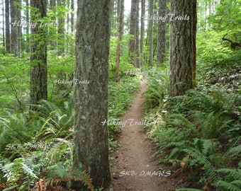Trail Between The Trees, DIGITAL DOWNLOAD,  forest decor,woodland art,Oregon forest art, Fine Art Photography by Sharon at HikingTrails