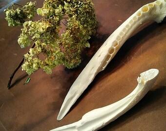Alligator Jaw Bone Knife, ritual tool