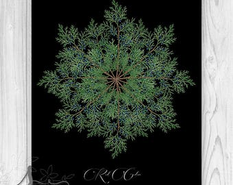 Red Cedar Botanical Holiday Home Decor, Winter Home Decor, Botanical Mandala, Cedar Pine Greens, Christmas Wall Decor, Botanical Snowflake