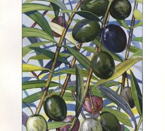 Original Print antique print ,decorative art kitchen decor wall art,food, Fruits, Olives