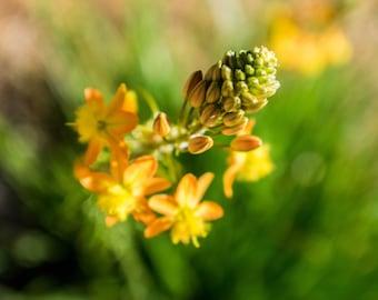 Digital Download Yellow Flower
