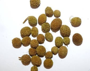 150 berries for creating miniature vegetable natural Pine Cone