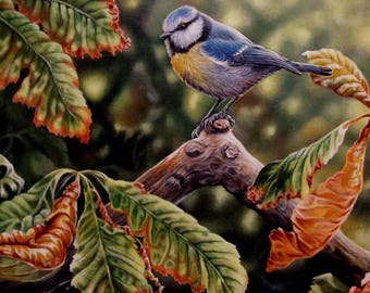 Limited Edition Print-Autun Gold-Blue Tit
