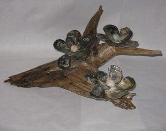 Driftwood and shell decoration piece