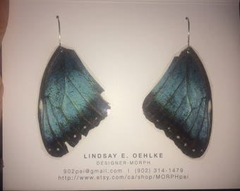 Real Costa Rican butterfly wings: BLUE MORPHOs -- ethically sourced! #2