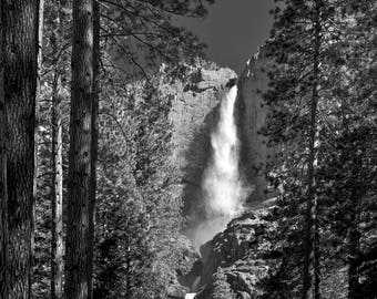Yosemite Falls and Forest - Archival Photographic Print