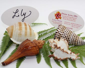 Sea Shell Place Card Holders, Business Card Holder, Table Numbers, Beach Wedding, Wedding Decor, Table Decor, Name Holders, Menu Holder