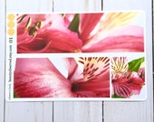 Alstroemeria planner stickers | Alstroemeria 01 photo stickers | full box planner stickers | Peruvian lily stickers | vinyl matte stickers |