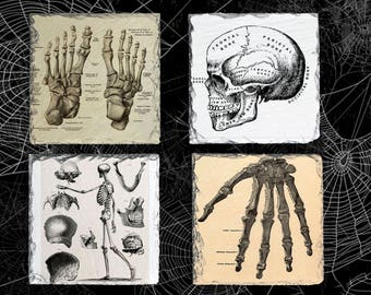 Vintage Anatomy Photo Gift Idea, Skeleton Bones Coaster Set, Hostess Gift, Halloween Hostess Present, Slate Drink Coaster Set of Four