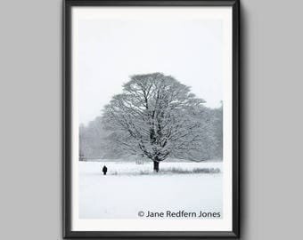 A Tree in Erddig in the Snow, an Erddig Countrypark Landscape Photograph.