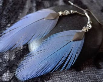 Real Blue Parrot feather earrings.