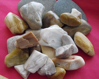 Light Colored Petrified Wood Lot , Assorted Polished Fossilized Wood Pieces