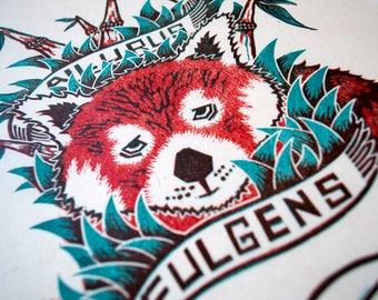 Ailurus fulgens - Red Panda