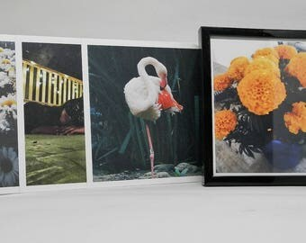 Dainty- 5 x 5' photo series