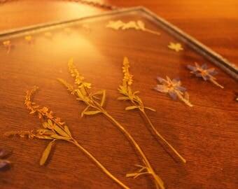 Real Pressed Flower, Botanical, and Fern Wall Hanging, 10x10 Zinc Float Frame, Pressed Flower Art, Pressed Plants Glass Frame