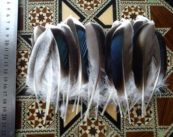Feathers of peacock blue / grey/white 10-14cm 20pcs natural