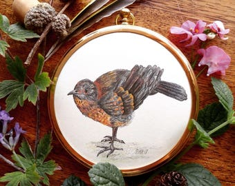Framed Miniature of Blackbird Fledgling 'Jeremy'