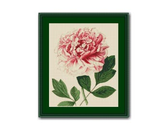 Peony Floral Counted Cross Stitch Pattern / Chart, Instant Digital Download  (AP006)