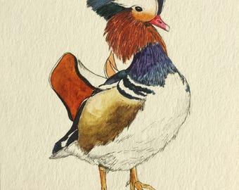 Bird: Mandarin Duck