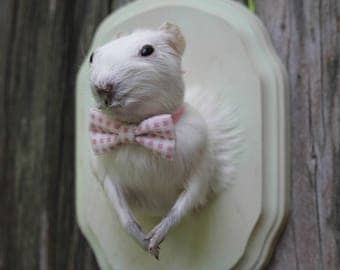 Albino Guinea Pig Taxidermy with Pink Bow Tie
