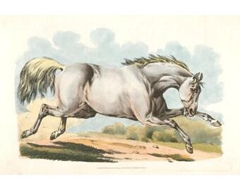 White horse art print, Equine art, Antique horse art, Horse fine art, Horse wall art, Horse drawing, Horse painting, Running horse, Etching