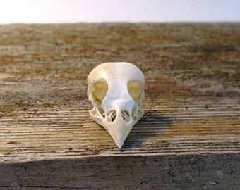 Real Sparrow Skull with Jaw Legal Bird European House Sparrow
