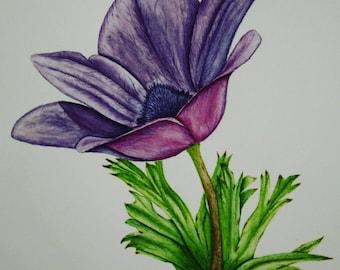 Watercolor Anemone Illustration