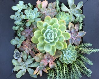 ART OF SUCCULENTS, Living Picture, Vertical Garden, Succulent Picture, Gift, Table Centrepiece, Growing Picture, Gift for Plant Lover