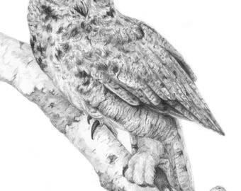 Great Horned Owl | Fine Art Print
