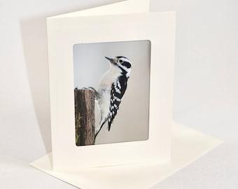 Downy Woodpecker - Folded photo frame card