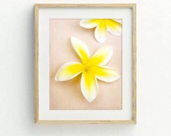 Tropical flower art printable, plumeria art, plumeria prints, Hawaiian decor, Hawaii art, printable photography, DIY tropical flower print.