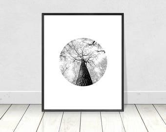 Tree Print, Black and White Print, Tree Printable Art, Black and White, Tree Wall Art, Nature Print, Forest Art, Minimalist Art, Photography