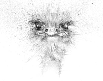 """Limited Edition Giclee Ostrich Art Print """"Alfred"""""""