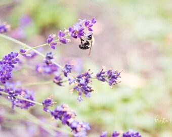 Flower Photography, Lavender Photography, Bumblebee Print, Lavender Photo, Nature Photography, Purple Wall Art, Garden Photo, Nature Decor