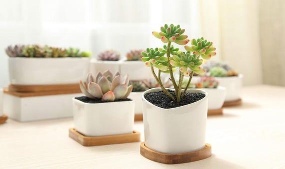 Simple Planter, Succulent Planter, Terrarium Miniature,Fairy Garden Decor,DIY Terrarium Succulent Accessories,Home Decor, Garden Tools