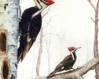 Birds of Maine Watercolor Notecards