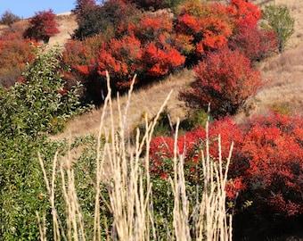 Fall Colors outside Colfax, Washington