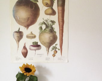 French Lithograph  Paper of 1852  No 3 Vilmorin-Andieux The Vegetable Garden Elisa Champin Le Jardin Potage 49x63 cm Wall art