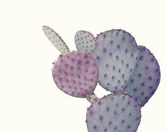 Purple Cactus; fine art photography, modern art, wall art, loft art, desert, bedroom art, wall decor, minimal, dorm art, by F2images