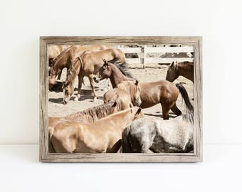 Western Horses Photograph   Ranch Photography   Rodeo Horses Print   Physical Print