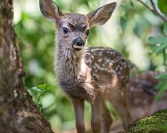 FAWN PHOTO Print, Baby Animal Photograph, Woodland Nursery Art, Deer, Safari Nursery Decor, Kids Room Decor, Cute, Woodland Baby Shower, Zoo