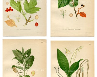 Botanical Wild Flower Prints, Group of Four Individual Antique Wild Flower Prints, Gardening Gift. Decorative Wall Art Prints Botanists Gift