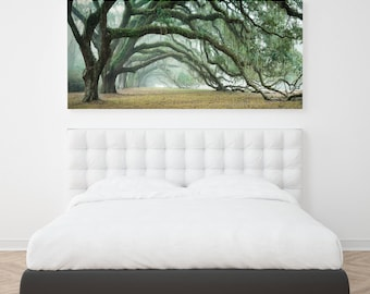 Old Trees Charleston South Carolina - Dixie Plantation - Southern Landscape Live Oak Trees
