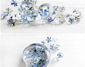 Forget me not blue flower plug earrings resin ear plugs wedding plugs pressed flower wedding gauges ear tunnels terrarium jewelry 4g 2g 0g