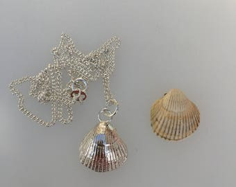 Silver Shell Pendant, Sand Cast with a Sterling Silver Curb Chain
