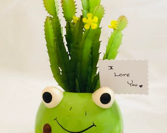 Animal Frog Pot with Artificial or Real Succulent Plant